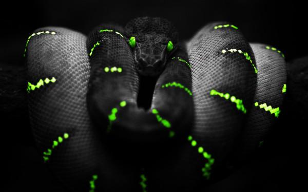 serpiente-negra-wallpaper-600x375.jpg