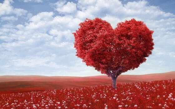 4 formas de amar a tucónyuge